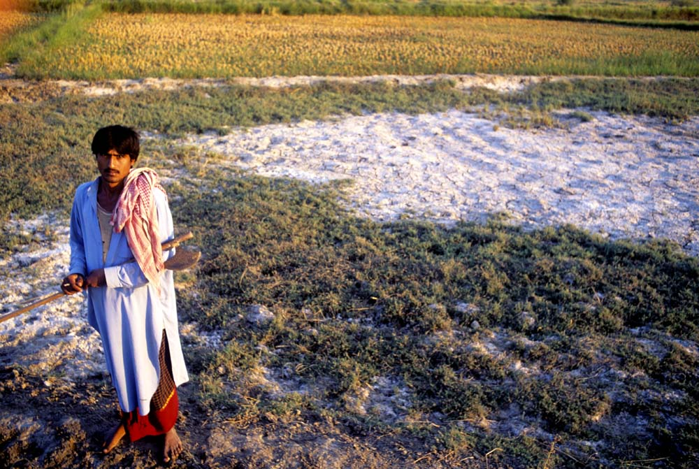 A farmer in Sindh stands in his field which is destroyed by the rising water table bring up salt, background, Pakistan